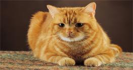 kenali-tanda-tanda-kucing-stress