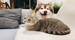 pelihara-kucing-saat-pandemi,-dapat-naikan-mood-dan-imun