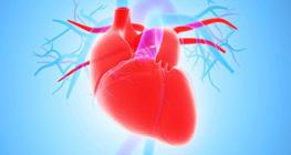 fungsi-jantung-manusia-yang-penting-untuk-disimak
