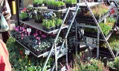 Asuransi Kebun Bunga Yang Mempercantik Rumah Bunda